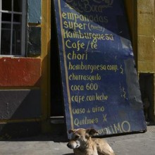 A dog enjoys the sunshine in Buenos Aires, Argentina.